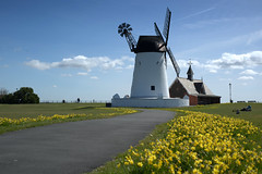 Yellow in Lytham (Tony Worrall) Tags: lancs lancashire city england regional region area northern uk update place location north visit county attraction open stream tour country welovethenorth nw northwest britain english british gb capture buy stock sell sale outside outdoors caught photo shoot shot picture captured resort town fylde fyldecoast coastal lytham scenic windmill building relic mill sails flowers daffodils yellow