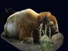 White Cloud sleeping (mrbillt6) Tags: prairie buffalo bison whitecloud tatonka northdakota