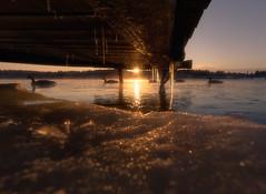 126 (petrisalonen) Tags: ice sun sunlight sunrise sunset landscape sunshine goose yellow nature natural river spring finland imatra snow icicle light