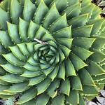 Living Pattern thumbnail