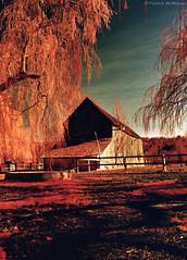 Kodak Infrared - Farm - Washington State (Electric Crayon) Tags: pacificnorthwest washingtonstate kingcounty pickeringfarm usa unitedstates america kodak 35mm ektachrome infrared slidefilm scanner primefilmxa minolta electriccrayon patrickmcmanus
