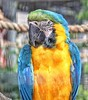 Posing parrot!😁 (LeanneHall3 :-)) Tags: parrot yellow blue green feathers bird closeup closeupphotography nature wildlife aviary eastpark hull kingstonuponhull canon 1300d