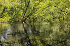Winding River (scottnj) Tags: 365the2018edition 3652018 day143365 23may18 scottnj scottodonnellphotography landscape river water tree trees green reflection 365project