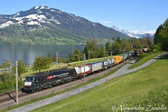 ES 64 F4 082, Immensee (CH) (Alexandre Zanello) Tags: es64f4 br189 mrce dispolok sbb cff ffs cargo international immensee zugersee lac lake güterzug landscape switzerland schweiz suisse svizzera svizra