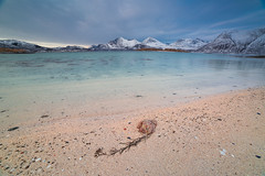 IMG_9034 (tomikaro) Tags: tromsø wintrer auroraborealis aurora trip landscape northern enjoythearctic arctic norway