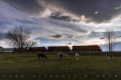 Llamas and Trains (Colorado & Southern) Tags: bnsfrailway bnsf bnsfes44c4 gees44c4 gec449w emdgp393 manifest manifesttrain trains train railfanning railroad railfan railway railroads railroading rail rr railroadtrack colorado coloradorailroads coloradotrains farm llama llamas