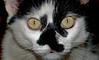 DSC_1970-3-1 (Sergio Nascimento BRAZIL) Tags: nikon d750 lens tokina 2880mm preto branco sergio guimaraes felino olhos amarelos