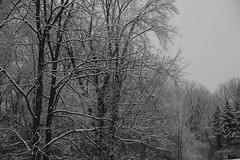 Wintry Trees (Ken S Three) Tags: snow ice wintry trees nature bw blackandwhite frosty frozen