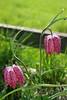 Rutland_018 (Adam.Eales91) Tags: rutland rutlandwater hambleton spring egleton