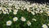 Indicios de primavera (Oscar Moral) Tags: flores parque