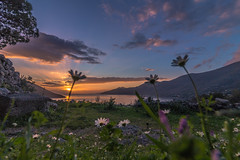 Daisies at sunset (Vagelis Pikoulas) Tags: daisy daisies flowers flower porto germeno pov perspective canon 6d tokina 1628mm landscape sea seascape sky clouds cloudy cloud view spring march 2018 nature