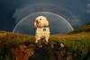 Goodbye our furry best friend. (B. Marshall) Tags: fifi rainbow