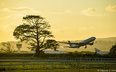 The tree 🌳 and the plane ✈️ (Maxime C-M ✈) Tags: nature fly sun sunset afternoon colors travel martinique island exotic tropical caribbean world beautiful passion aviation