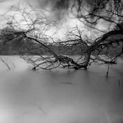 stormy branches calm water (my analog journey) Tags: 500cm tmax400 longexposure hc110 dilutionb homedeveloped mediumformat 120mm 35to220 filmisawesome filmlover filmshooter movformatcom cologne water nd30 10stopsmore branches bnw blackwhite