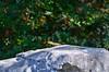 Kioni, Ithaca (dandridgebrian) Tags: kioni ithaca greece ionian sailingholiday greekholiday