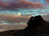 Moonrise At Sunset (Mimi Ditchie) Tags: supermoon wolfmoon fullmoon moon moonrise clouds pinkclouds sunset seecanyon mountains landscape getty gettyimages mimiditchie mimiditchiephotography