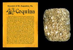 photo - Coquina rock, St. Augustine FL (Jassy-50) Tags: photo coquina rock sedimentaryrock limestone calcite shells seashells souvenir writing label