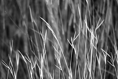 Grass in Black and White (Red Nomad OZ) Tags: grampians victoria australia grampiansnationalpark mackenziefalls