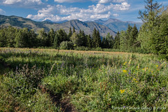Altai meadow (Tatters ✾) Tags: altai russia mountains meadow