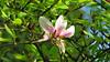 Strasbourg 009 (molaire2) Tags: strasbourg estrasburgo printemps primavera spring 2018 fleur cigogne orangerie arbre