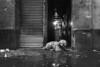 Cool haircut dog (Frederik Trovatten) Tags: dog dogs bnw blackandwhite streetphotography street fine art print poster wallpaper noir