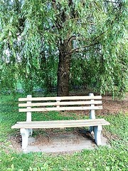 A BENCH UNDER THE WEEPING WILLOW (Visual Images1 (Thanks for over 5 million views)) Tags: bench hbm binghamton ny