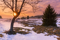"""Tauwetter im Hochmoor, Erzgebirge / Thawing in the high moor, Ore Mountains • <a style=""""font-size:0.8em;"""" href=""""http://www.flickr.com/photos/91814557@N03/40802221684/"""" target=""""_blank"""">View on Flickr</a>"""