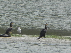 DSCN9969 (Gianluigi Roda / Photographer) Tags: wetlands waterbirds latesummer september 2012 oasi