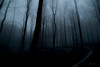 Beech forest and a secret path. (Normann Photography) Tags: fog alone atmosphere beech beechforest creepy darkness lighthunting mist mysterious thesecretpath
