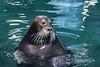Foca barbuda (Erignathus barbatus) (José M. Arboleda) Tags: polaria anima acuático foca pez agua acuario zoológico edificio ártico tromso noruega canon eos 5d markiv ef24105mmf4lisusm jose arboleda josémarboledac