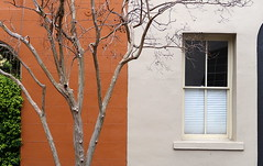 Wall to wall:  State Street, Charleston, SC (Spencer Means) Tags: architecture building wall shared painted color two tree orange cream beige window shade blind half bottom state street charleston sc southcarolina