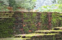 Tilaurakot, Lumbini, Nepal (cattan2011) Tags: bricks 尼泊尔 traveltuesday travelphotography travelbloggers travel naturelovers natureperfection naturephotography landscapephotography landscape nature architecturephotography architecture buildings tilaurakot lumbini nepal