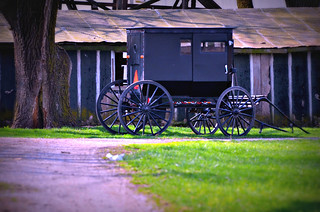 Amish Buggy -- Waiting to Go