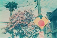 (Casey Lombardo) Tags: film filmphotography filmgrain grainy expired expiredfilm seattlefilmworks seattlefilmworks5247 eastman5247 cinestill analog minoltasrt101 longbeach longbeachca signs streets stopsign palms palmtrees palmtree gritty
