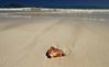Take Me Away ('Dazza' Quarin...back from the Dead) Tags: hawaii hawaiianislands beach kailua oahu