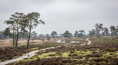 Kalmthoutse heide (janmennens) Tags: 2018 grensparkdezoom kalmthoutseheide wandeling pasen