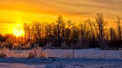 Sunrise beyond the fence. (Bob's Digital Eye) Tags: april2018 bobsdigitaleye canon canonefs1855mmf3556isll fence fencedfriday frost h2o hoarefrost laquintaessenza silhouette snow snowscene spring sun sunrise t3i yellow flickr flicker back30 backlit
