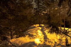 Sun is always shining (evakongshavn) Tags: goldenscape winter winterlandscape snow golden light snowfall winterwald landscape landschaft paysage natur nature sun letthesunshinein sunshine sundaylights