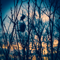 В ожидании солнца / Waiting for the Sun (Yuri Balanov) Tags: trees shadows lights contrast fullcollour black blue orange yellow shadowsun spring mood springmood pentax pentaxricoh pentaxk5iis pentaxda40mm moscowsity russia sky tree forest clouds