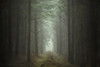 Lost (aveyardphotography) Tags: forest woods woodland path light trees misty foggy yearsley moody nature north yorkshire way out lost above cold