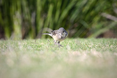 Dancing on the grass (Arranion) Tags: closeup dancing little light canon eos 40d 70200mm f4 l