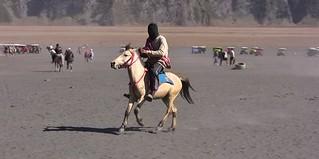 INDONESIEN, Java, Pferde und Reiter in der Caldera (Salndmeer) am Bromo, 17503/10079