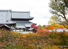 Tofukuji in the Fall (DanaMichelle309) Tags: fallfoliage japan kyoto shrine tofukujitemple travel kyōtoshi kyōtofu jp