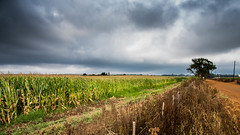 Other side of the fence (ChrisMu11er) Tags: fence landscape country gravel road clouds dramatic nikon nikond750 d750 mornings southafrica africa farming