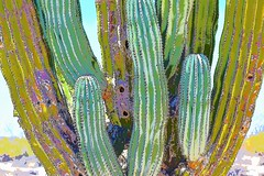 Cactus colors (thomasgorman1) Tags: colors colorized nikon effects processed closeup desert nature baja mx mexico photoshop
