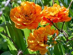 just flowers in April (uiriidolgalev) Tags: just flowers april