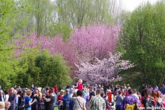 IMGP2795 (hans03) Tags: cosplay wettbewerb marzahn gärten der welt kirschbäume blüte kirschblütenfest 2018