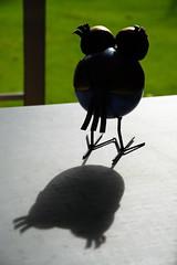 Travels of a bird (Kiwi Jono) Tags: metal bird shadow dfa28105f3556 pentax pentaxk1