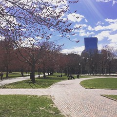 Spring on the common (IVSTINIANVS) Tags: ifttt instagram byjjmg iphone phone cameraphone cellular mobile cellphone