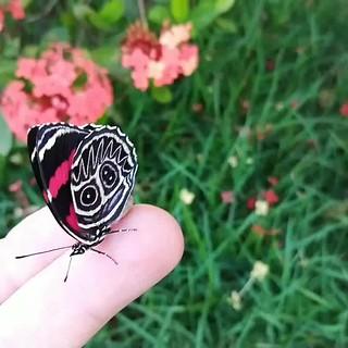 Cores da natureza.#flores #flowers #borboletas #naturalbeauty #natureza #naturephotography #jardim #floreslindas #revistaxapury #eunotg #criacaodedeus #obradivina #instaflowers #instaflores #motox2 #instamotox2 #garden #floricultura #intagram #instalike #